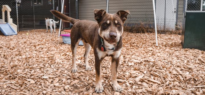 Arnie, an adopted Mixed Breed in Hood River, OR
