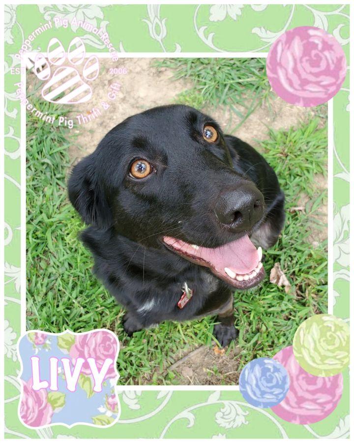 Livy 5