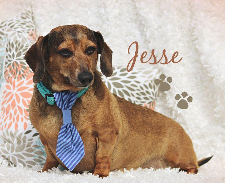 Jesse 1