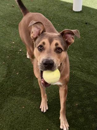 Dog for adoption - Queen, a Mixed Breed in Orlando, FL