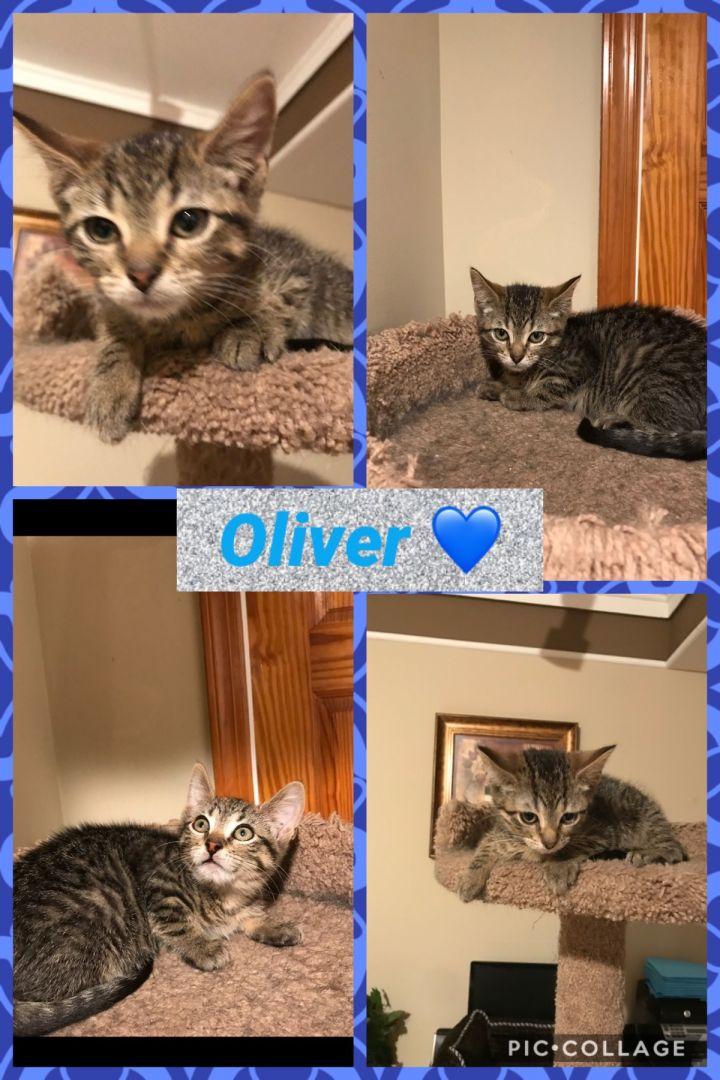 Baby Oliver 3