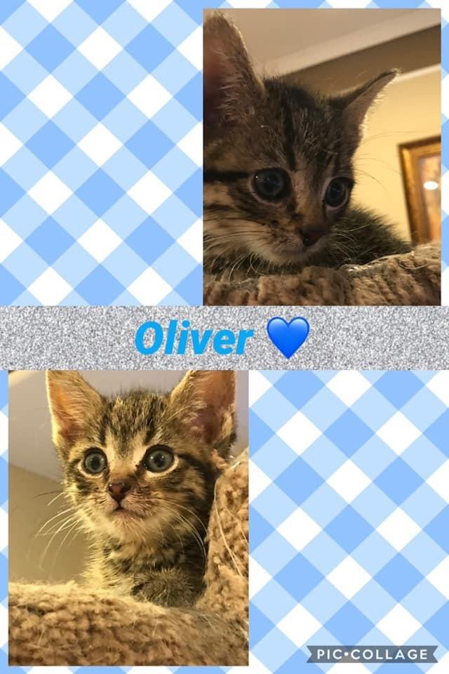 Baby Oliver 2