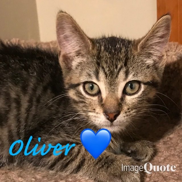 Baby Oliver 4