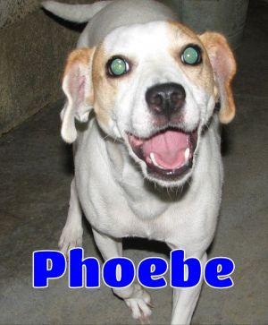 #171 Phoebe -sponsored