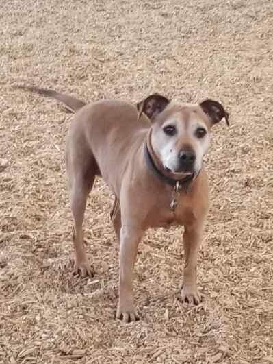 Sacco (Courtesy listing-not at shelter)