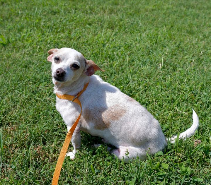 Rae, an adopted Mixed Breed in Spotsylvania, VA