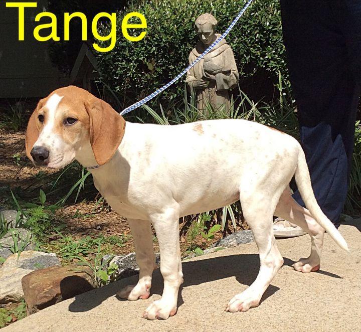 Tange 1