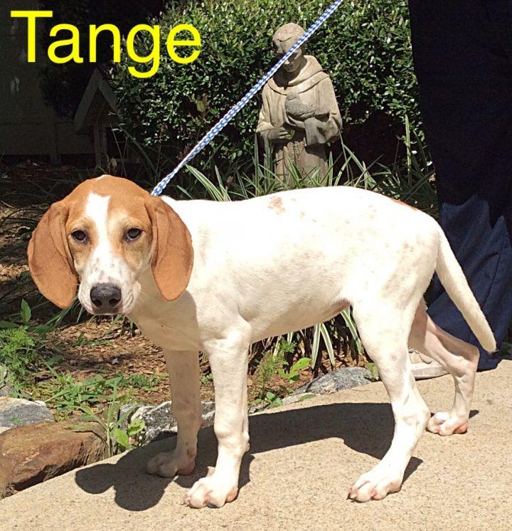 Tange 2