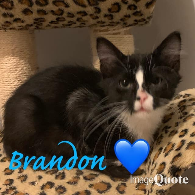 Brandon- 90210 themed litter 4