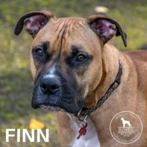 . Finn .