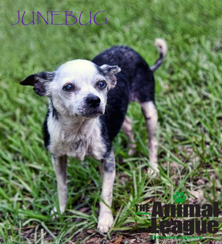 Junebug 1