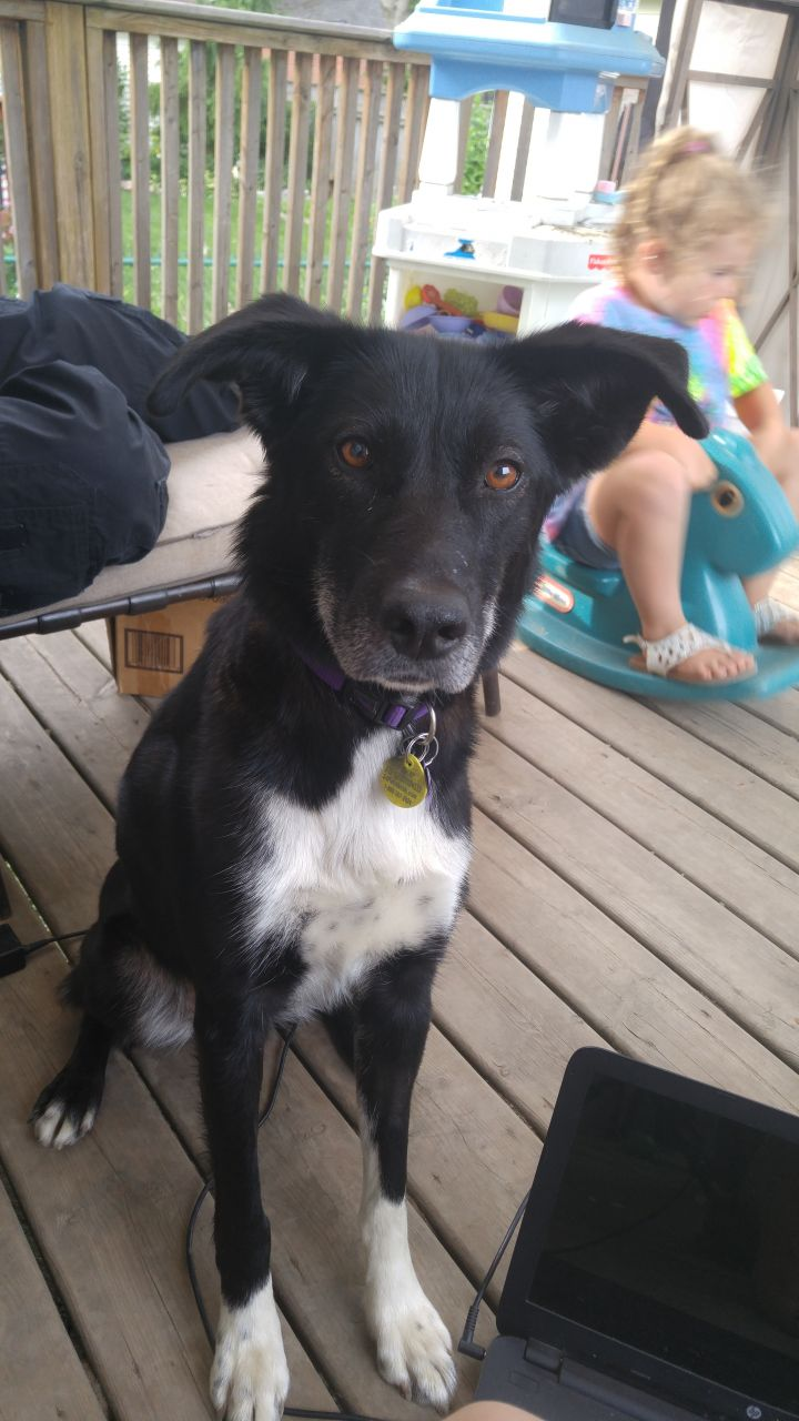 Maggy, an adoptable Mixed Breed in Chatham, ON