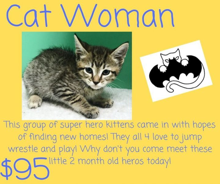 Cat for adoption - Cat Woman, a Domestic Short Hair in