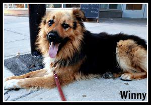 Winny (pronounced Vinny)
