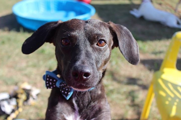 Susy, an adoptable Mixed Breed in Fredericksburg, VA