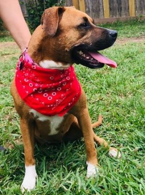 You can fill out an adoption application online on our official websiteVery sweet goofy girl makes