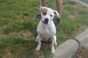 Meet Spot This handsome fellow is looking for a new home after he was sadly aba