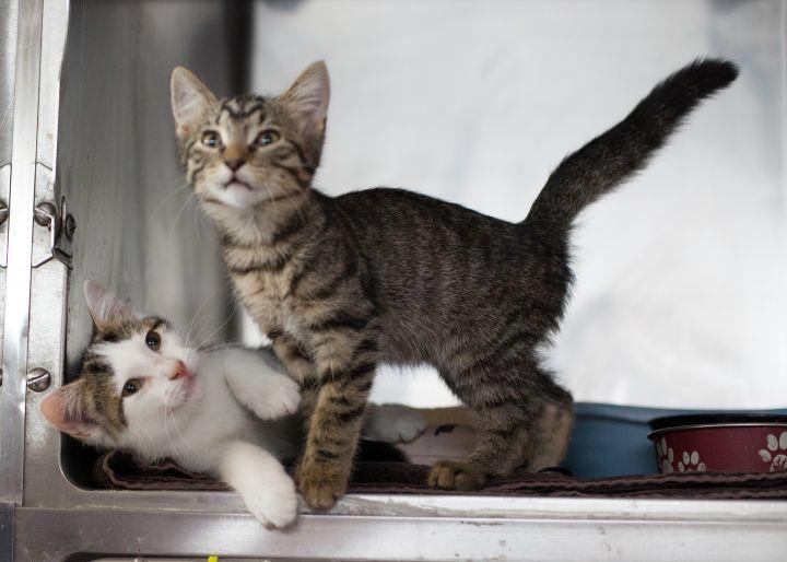 Sweetie & Simba 1
