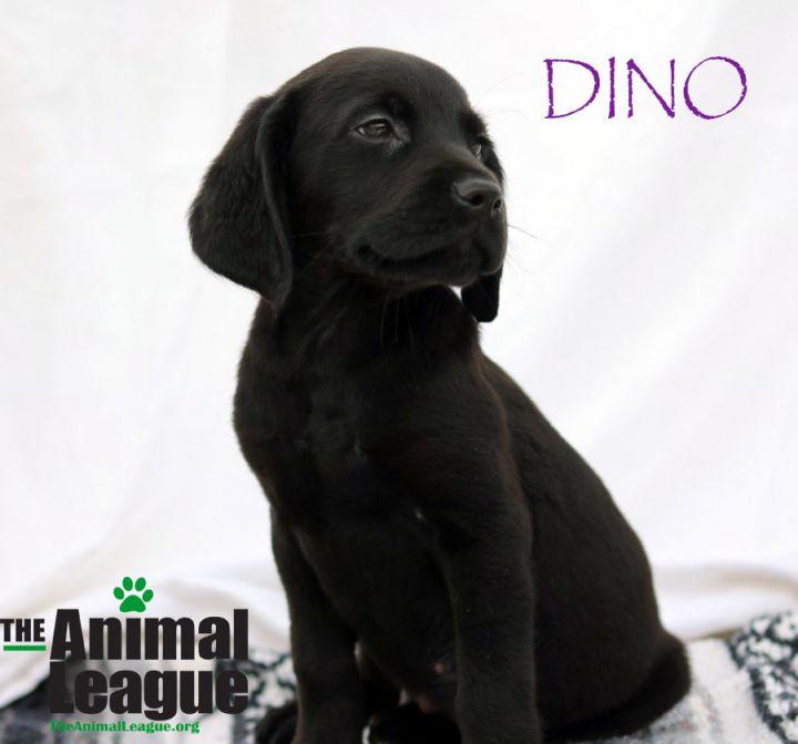 Dog for adoption - Dax, a Golden Retriever Mix in Clermont, FL