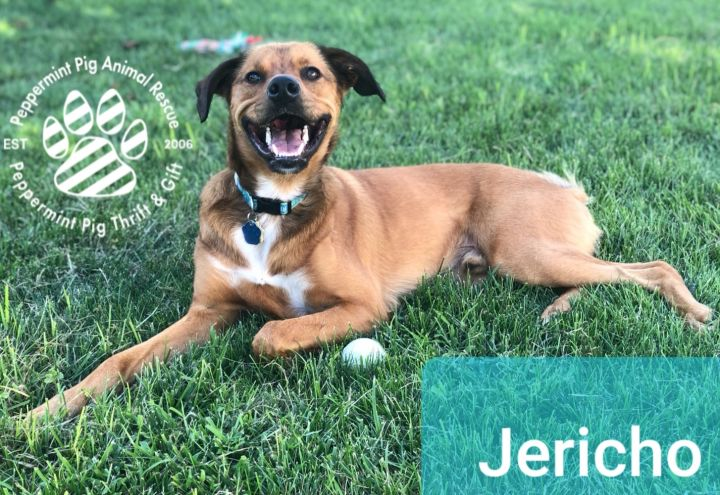 Jericho 5