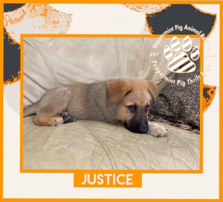 Justice 5