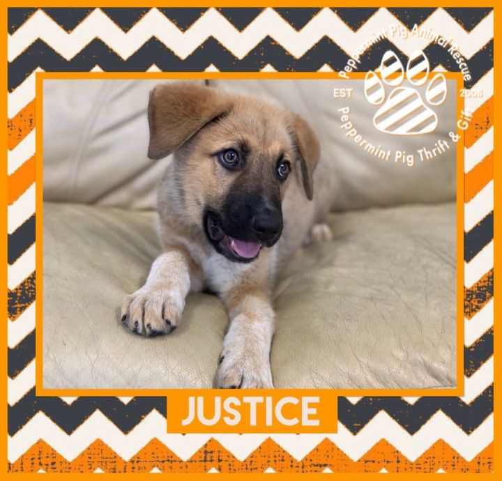 Justice 6