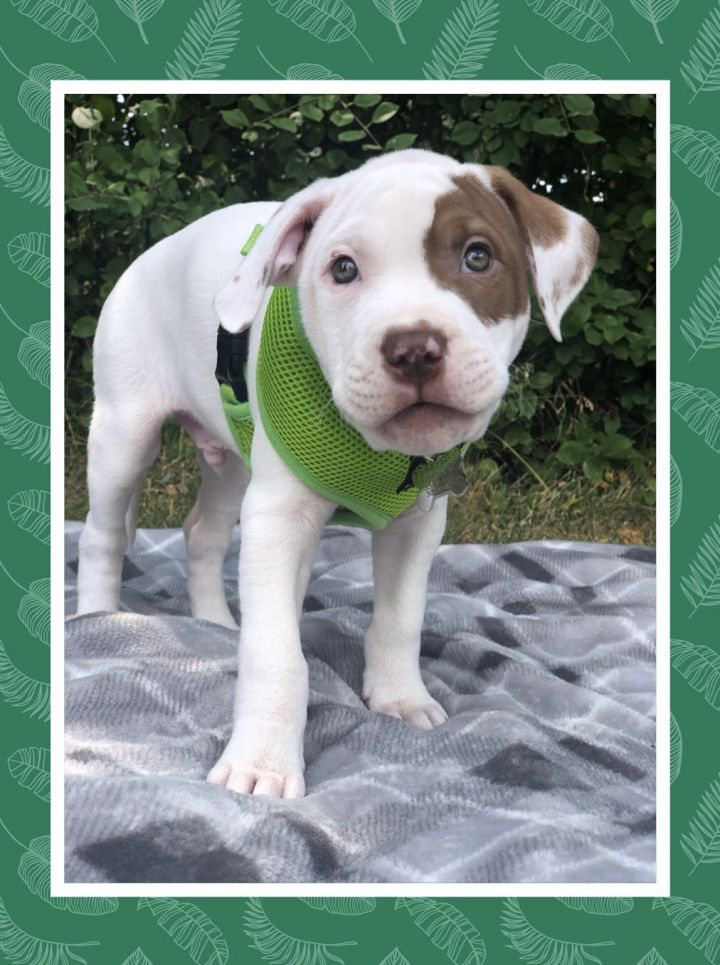 Ryley-Adopted! 1