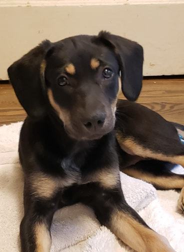 Dog for adoption - LATASHA, a Beagle & Spaniel Mix in Lincoln, NE