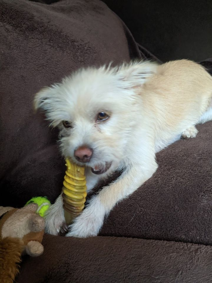 Dog for adoption - Aspen, a Terrier Mix in Calgary, AB