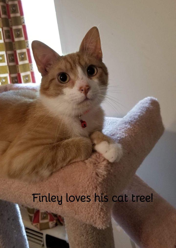 Finley 1