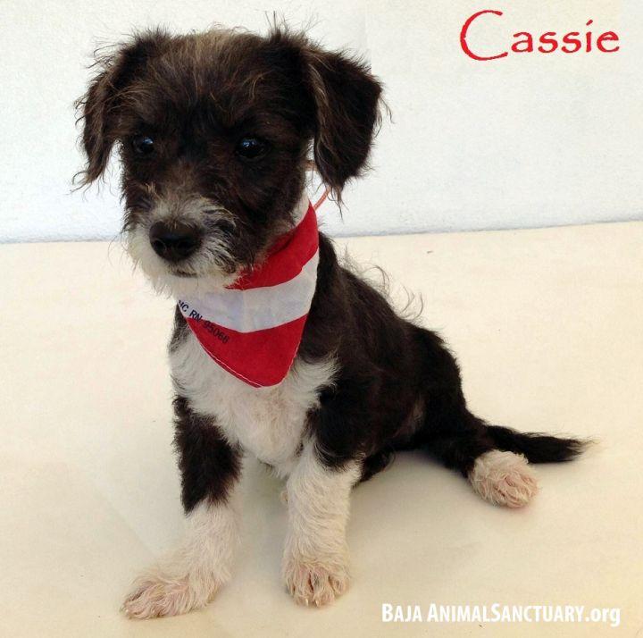 Cassie 1