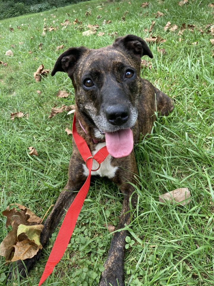 Ziti, an adoptable Mountain Cur Mix in Spencer, IN