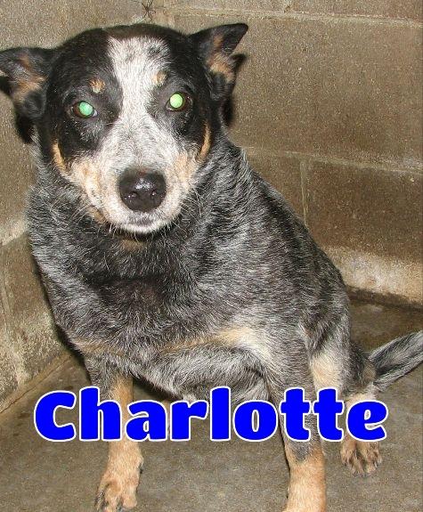 #174 Charlotte
