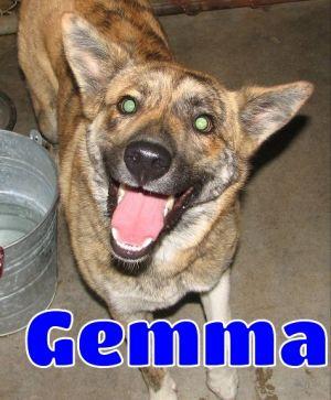 #179 Gemma -sponsored