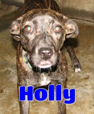 #182 Holly -sponsored