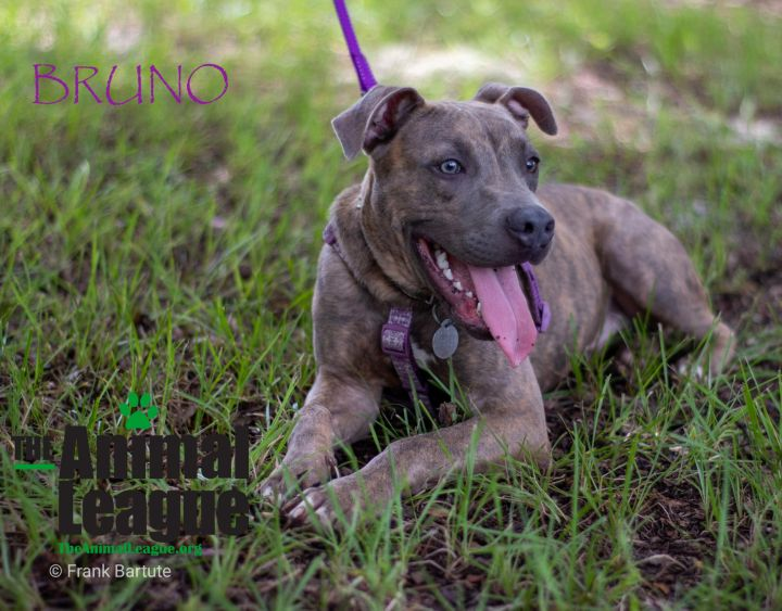 Bruno 2