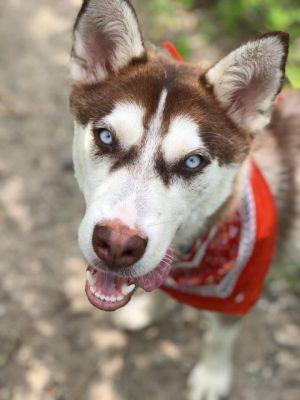 Adoptable Dogs - Posh Pets Rescue
