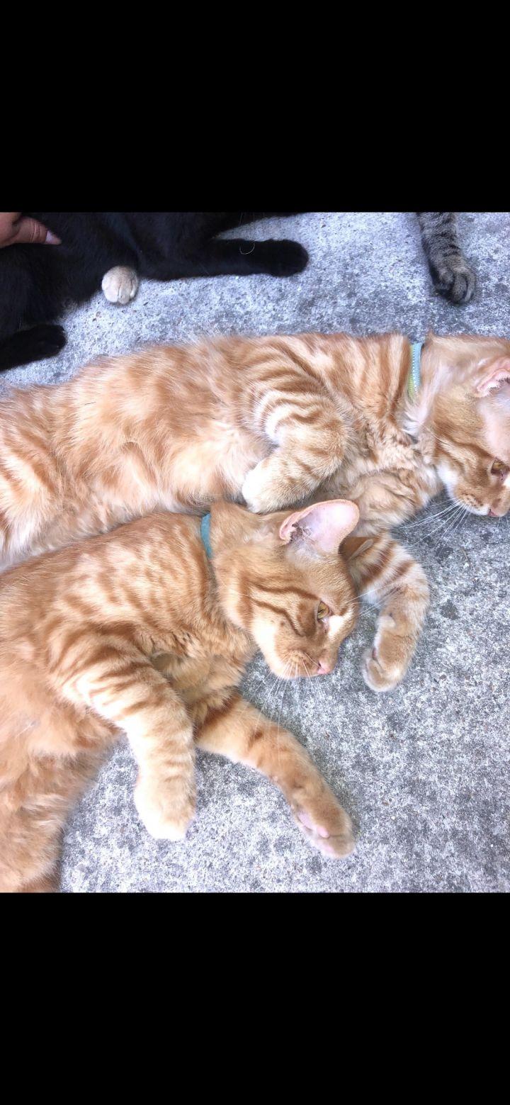 Orange kittens 1 & 2 3