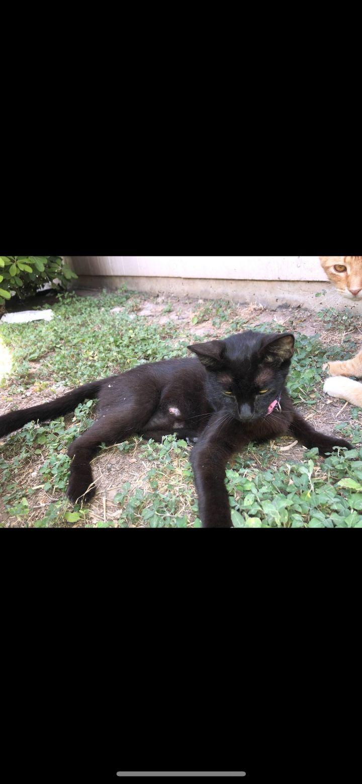 Black Cat #3 1