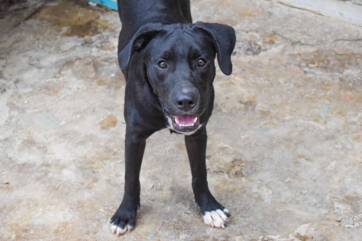 Diego, an adoptable Mixed Breed in Loiza, PR