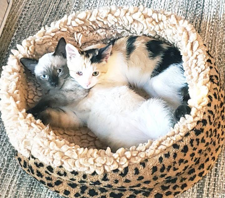 Angelina & Lily-May 1