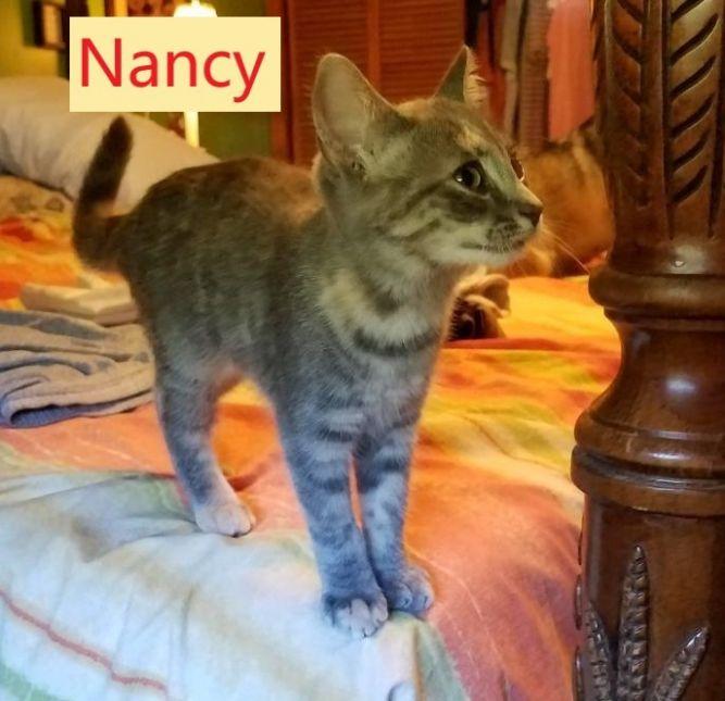 Nancy (Tammy's foster)