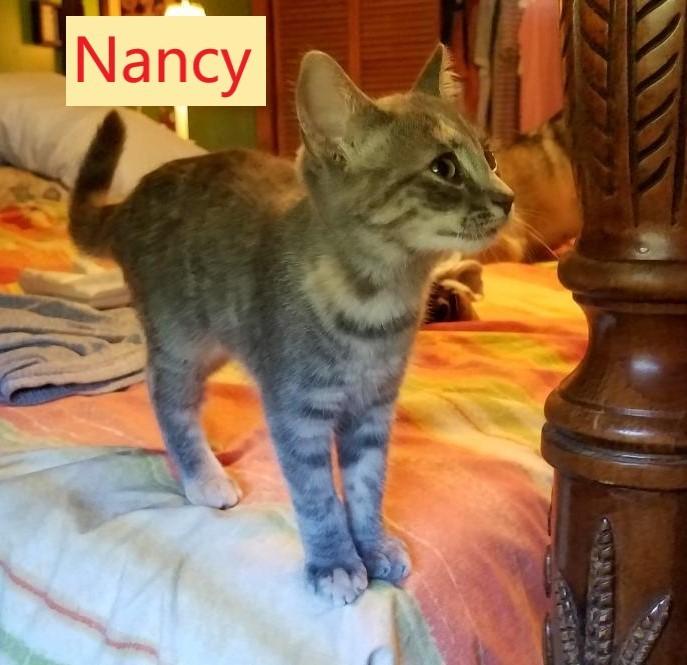 Nancy (Tammy's foster) 1