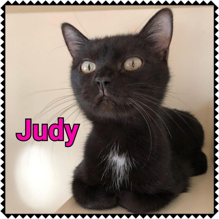 Judy 1