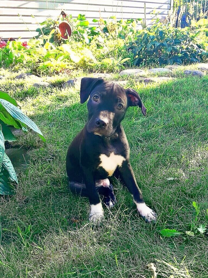 Ray Charles-Adopted! 2