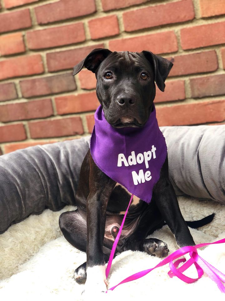 Ray Charles-Adopted! 3
