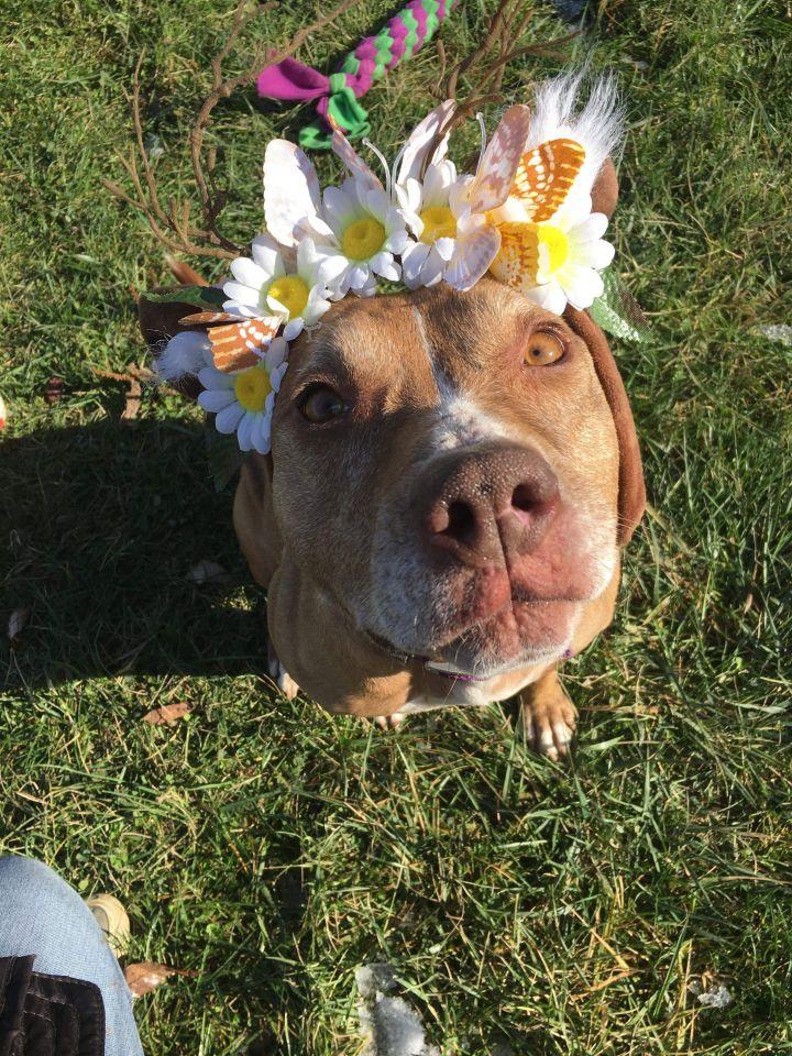 Lorain County Dog Kennel Facebook Petfinder