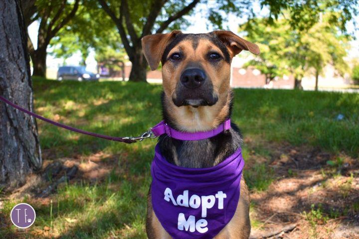 Nova-Adopted! 3