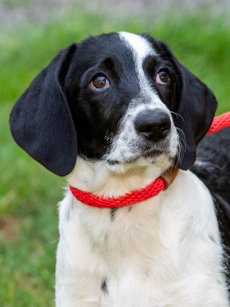 Millie the puppy 2