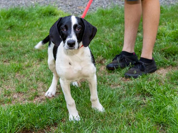 Millie the puppy 3